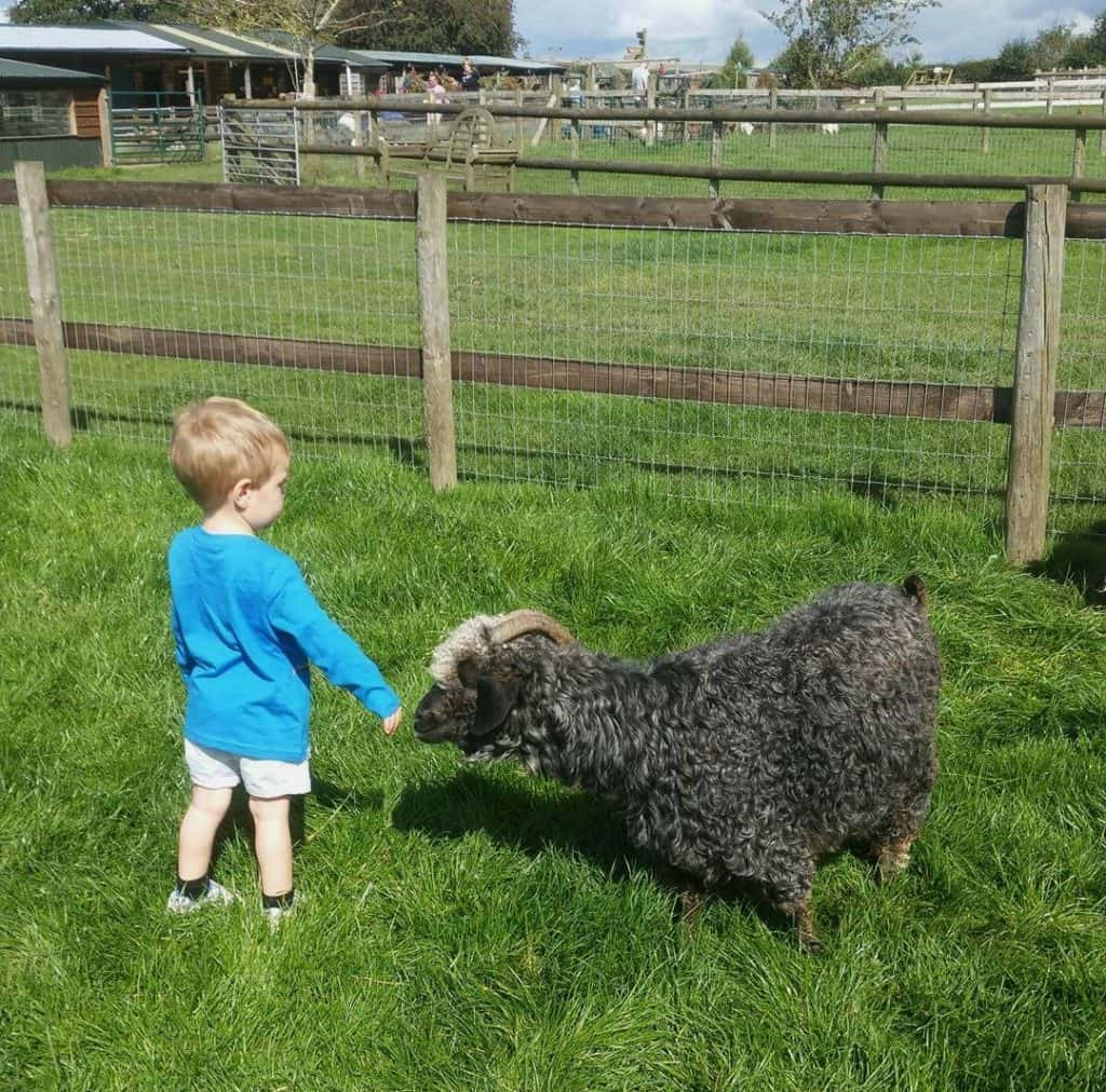Small breeds farm