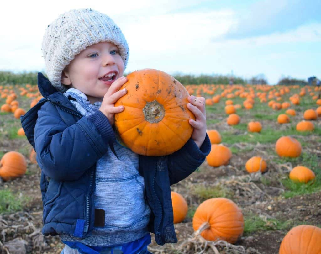 Pumpkin picking fun at Pickwell Farm
